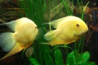 fish-908862_960_720